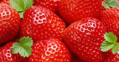 Fragolicoltura: in Francia ad Agen domani esperti italiani, francesi e spagnoli