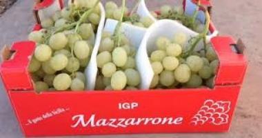 Uva da tavola siciliana molto bene all'ingrosso a Milano e Firenze