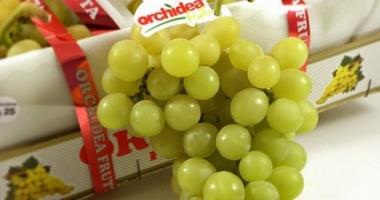 Primi tagli, anticipati,  di uva bianca e nera nel barese, caldo in agguato