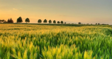 Coldiretti: Puglia,a rischio desertificazione 57% aree